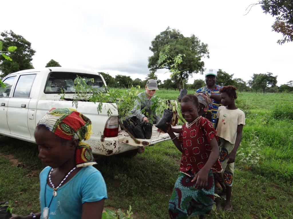 Distributing Legume Saplings