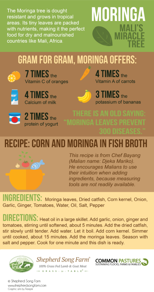 Moringa benefits infographic