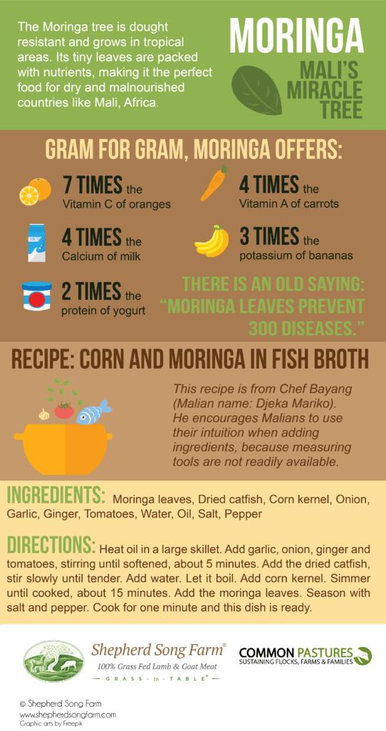Moringa benefits infographic