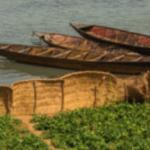 Vegetable gardens along Niger River