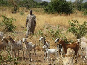 Amadou Diaby & his herd