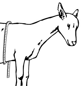 Goat tape measure