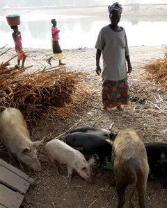 A woman watches a couple of pigs eating their food. Two girls are walking in the background along a body of water.