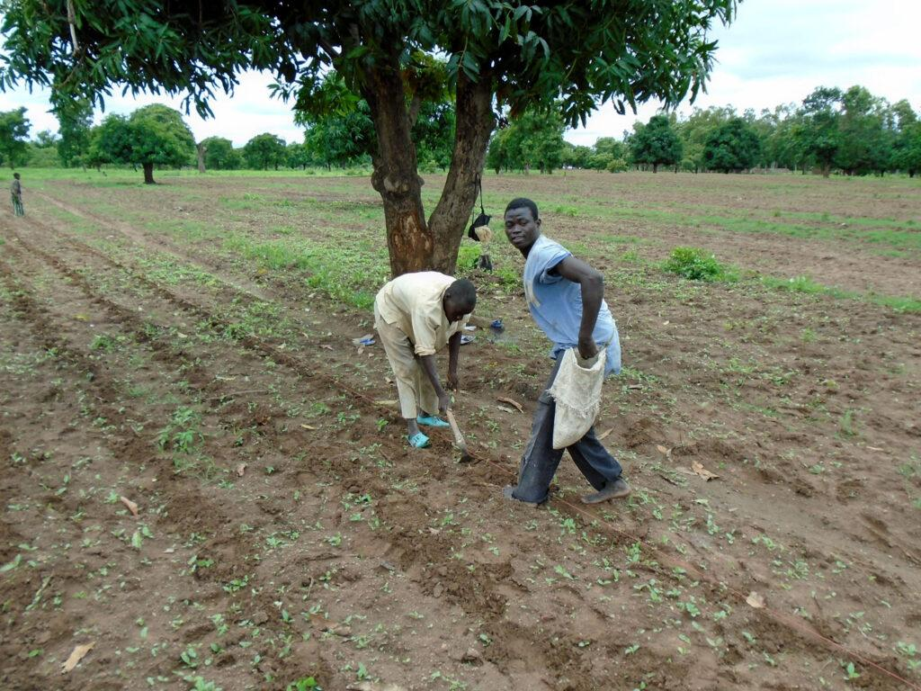 trees and climate change could improve this cropland where farmers are working the land to prepare the crops