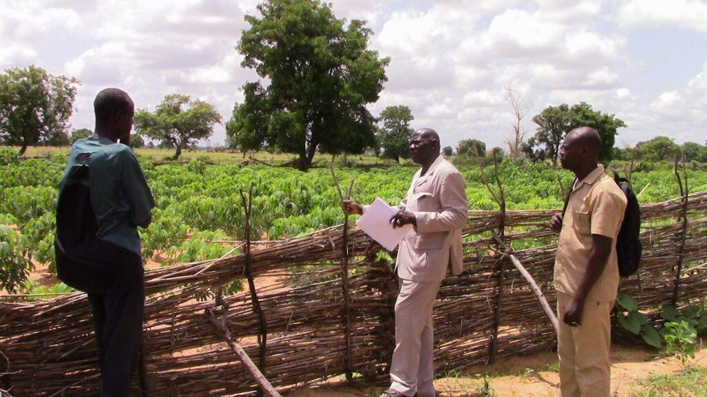 three men stand next to a field with cassava plants. there are clouds in the sky with bright sun and distant trees